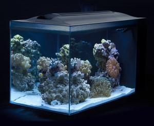 Fluval Evo Saltwater All In One Kit 52 Litre Aquarium
