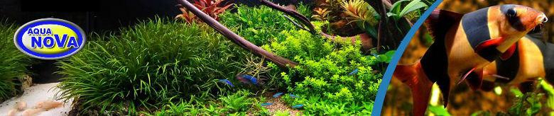 Aquarium & Fish Tanks / Aqua Nova Aquariums - The Aquarium Shop