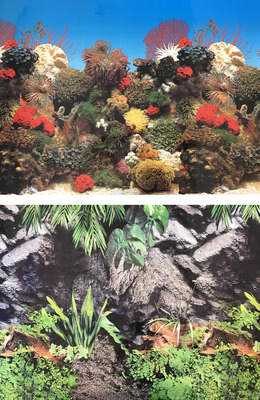 Aquarium Background Double Sided 90cm high - Watergrass - Coral