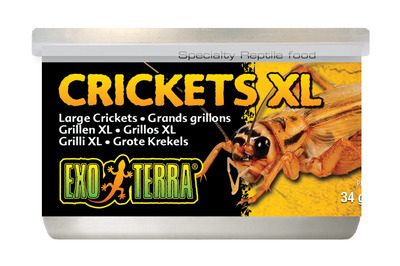 Exo Terra Canned Crickets XL 34g