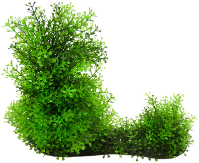 Large Planted Aquariums Aquarium Plant Extra Large