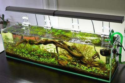 Mr Aqua Book Shelf Frameless Glass Aquarium 45 Litres 3ft