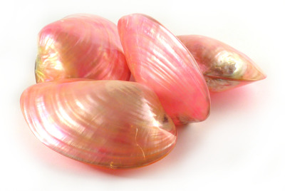 Sea Shell Cabibe Pink Pair Large