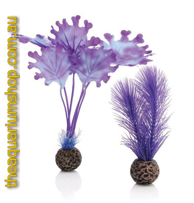 biOrb Purple Kelp Plant Set Medium