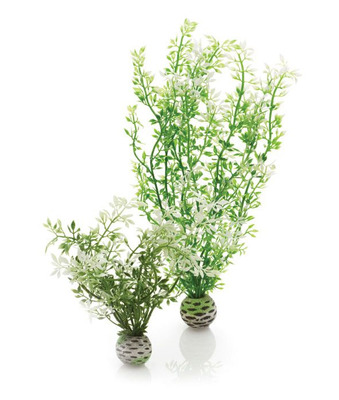 biOrb Winter Fern Medium Plant pack Set of 2