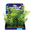 Amazon Jungle Anacharis Display 15cm