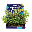 Amazon Jungle Ludwigia Display 15cm