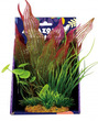 Amazon Jungle Mixed Madagascar Display 20cm