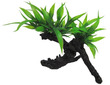 Aqua Dekore Exotic Plant Replica Twin Indo Fern on Log