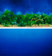 Aquarium Background Double Sided 30.5cm - Blue and Plants