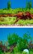 Aquarium Background Double Sided 59cm high - Blue Spring Wood and Aquatic Plants