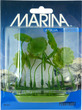 Marina Aquascaper Foreground Plant Aquarium Plant Pennywort