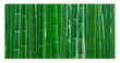 Bamboo Forest Poster Background  for Aquarium Terrarium Vivarium
