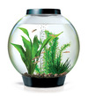 biOrb Classic 15L Circular Aquarium Black - Complete Kit