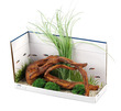 Fluval Accent Decore Ornament Mopani Wood with Moss Balls Large