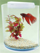 Half Moon Betta Aquarium Kit White