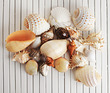 Natural Tropical Sea Shells Large Value Pack 25