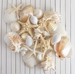 Natural Tropical Sea Shells  Boutique Pack 25