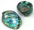 Polished Sea Shell Paua Deluxe