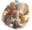 Shells Bag Coloured Mix 1kg