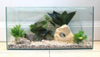 Standard Glass Aquarium 24 x 12 x 12inches high