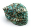 Polished Sea Shell Turbo Burgess Green Large