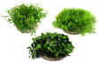 Sydeco Aquarium Plant Water Ball