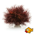 biOrb Aquatic Sea Lily Crimson