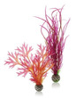 biOrb Colour Plant Set Medium Red and Pink